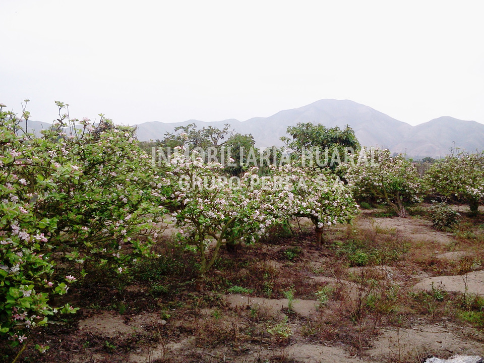 Venta de Terreno en Huaral, Lima 500m2 area total - vista principal