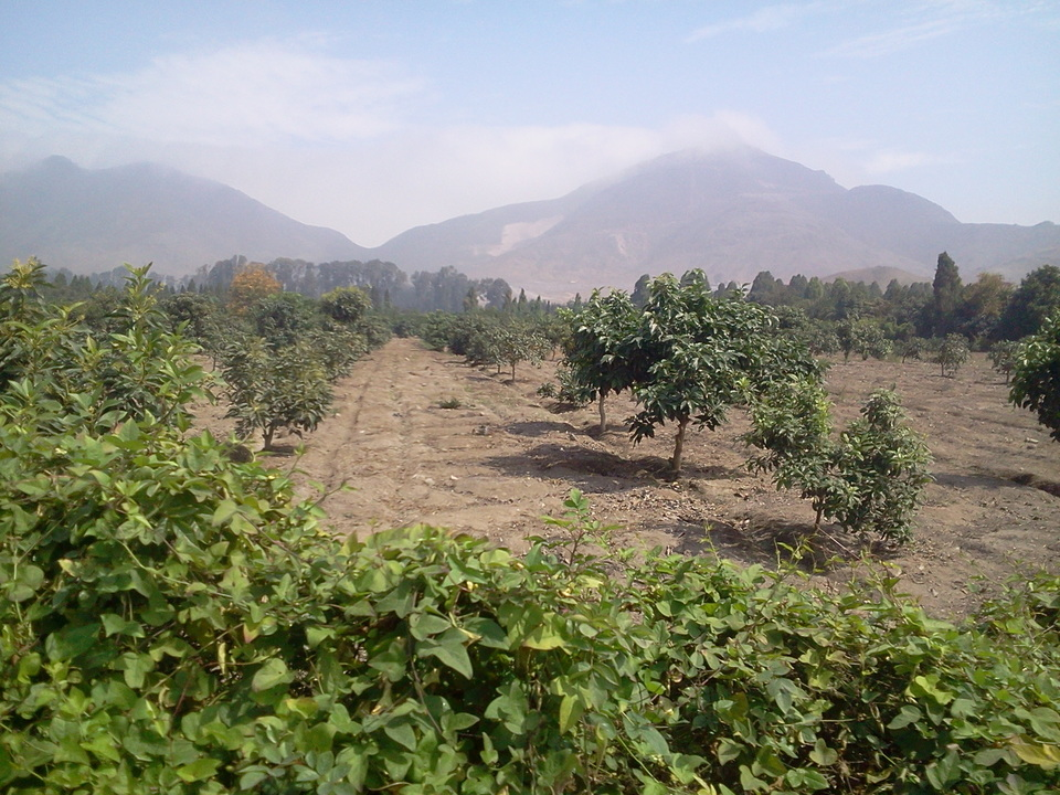 Venta de Terreno en Huaral, Lima - vista principal