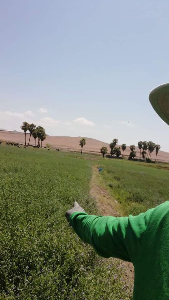 Venta de Terreno en Mejia, Arequipa - vista principal