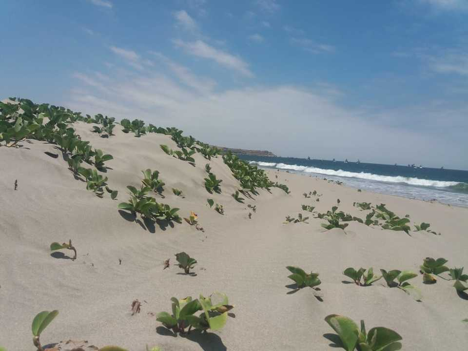 Venta de Terreno en Los Organos, Piura 180m2 area total