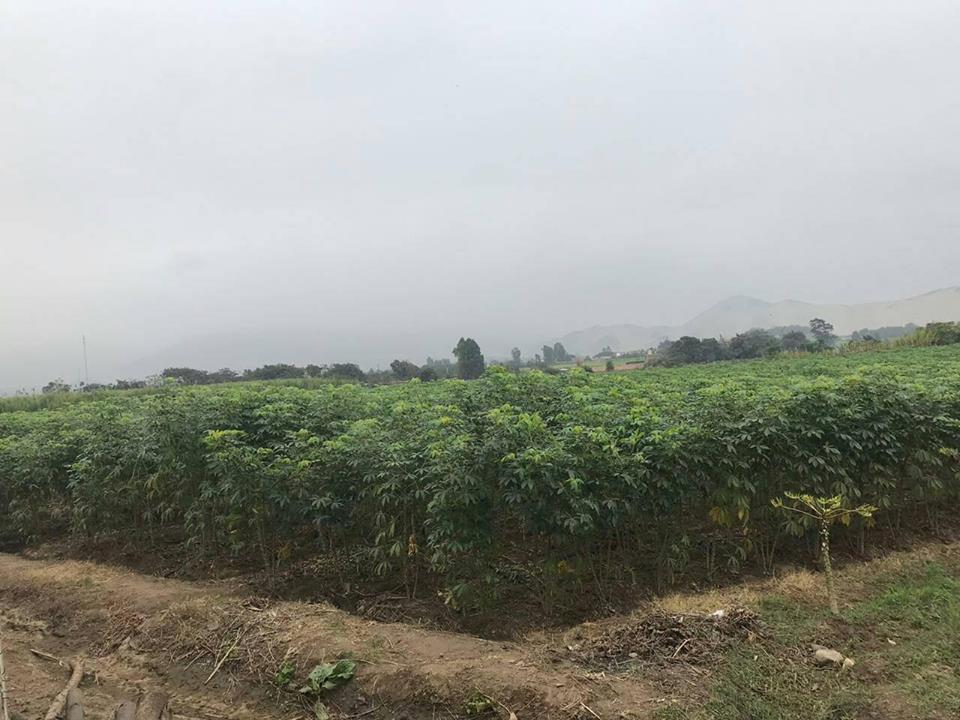 Venta de Terreno en Trujillo, La Libertad 7000m2 area total