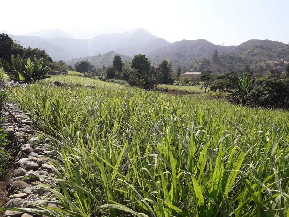 Venta de Terreno en Poroto, La Libertad 10000m2 area total