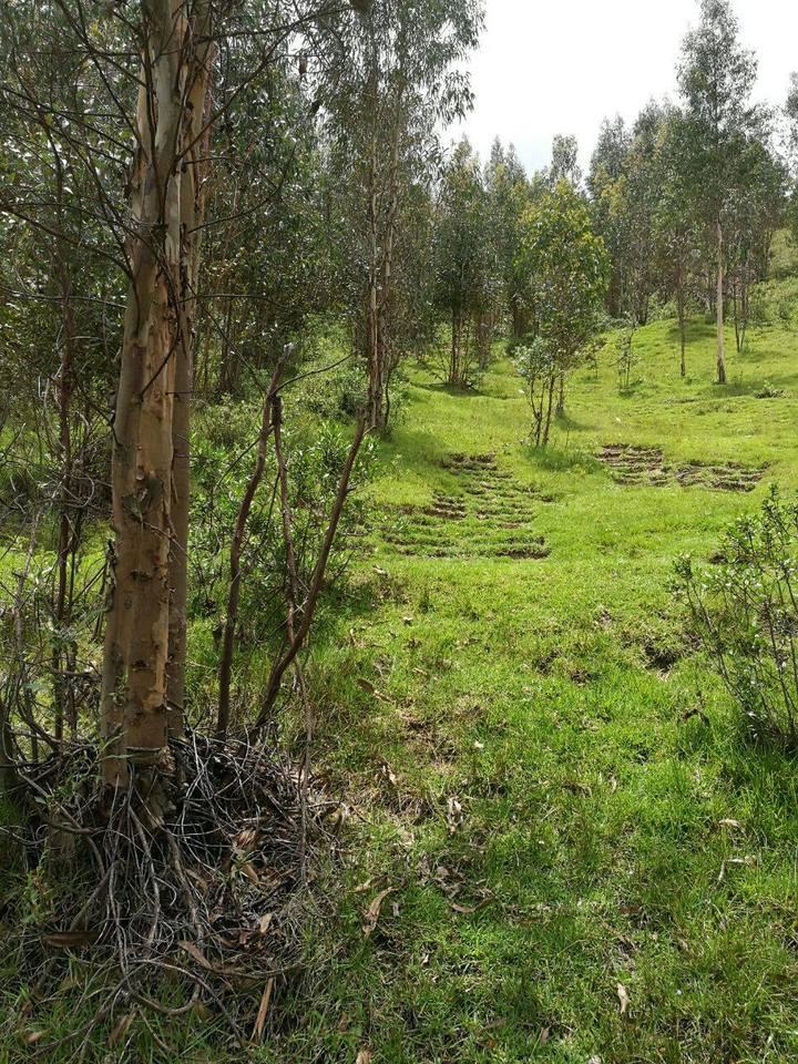 Venta de Terreno en Sabandia, Arequipa 5000m2 area total - vista principal