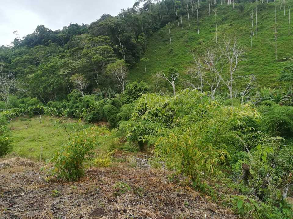 Venta de Terreno en Imaza, Amazonas 117m2 area total