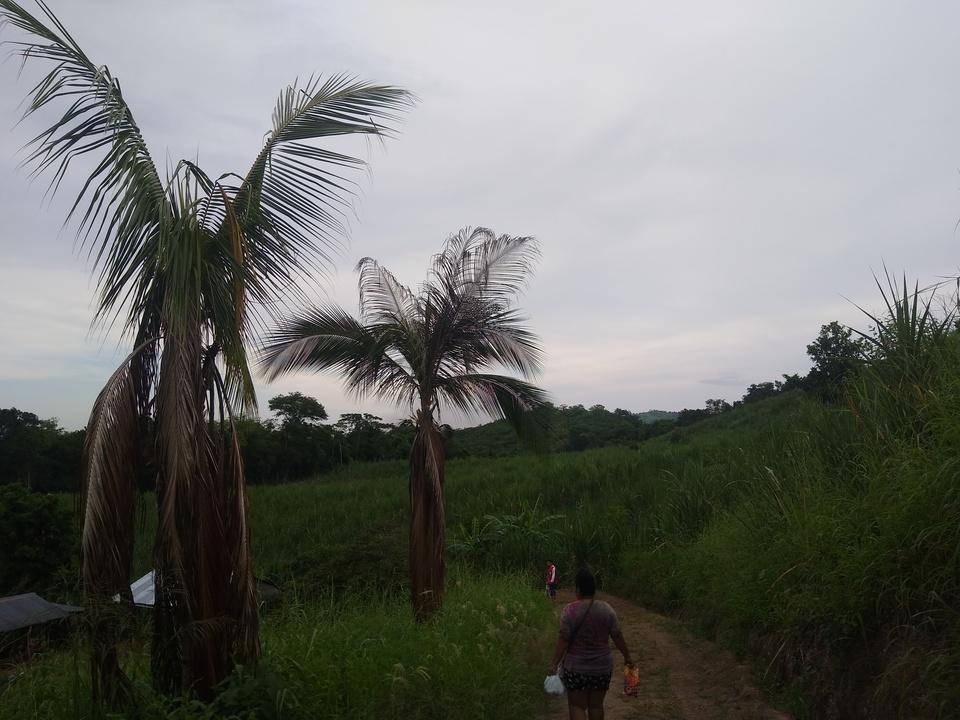 Venta de Terreno en Tarapoto, San Martin 5000m2 area total