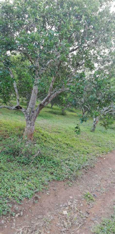 Venta de Terreno en Rio Negro, Junin 200m2 area total