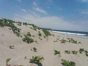 Venta de Terreno en Los Organos, Piura 180m2 area total - vista principal