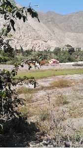 Venta de Terreno en Calango, Lima 1000m2 area total - vista principal