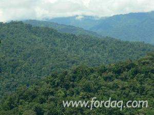 Venta de Terreno en Lamas, San Martin 220000m2 area total - vista principal