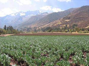 Venta de Terreno en Urubamba, Cusco 40m2 area total - vista principal