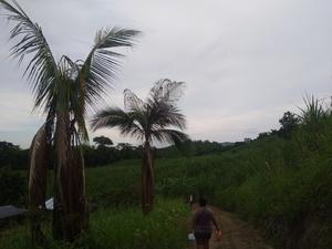 Venta de Terreno en Tarapoto, San Martin 5000m2 area total - vista principal
