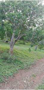 Venta de Terreno en Rio Negro, Junin 200m2 area total - vista principal