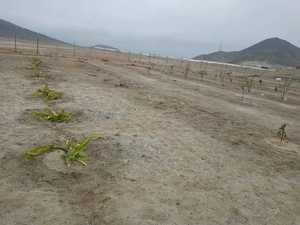 Venta de Terreno en Lima 120m2 area total estado Preventa - vista principal
