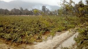 Venta de Terreno en Pachacamac, Lima 10000m2 area total - vista principal